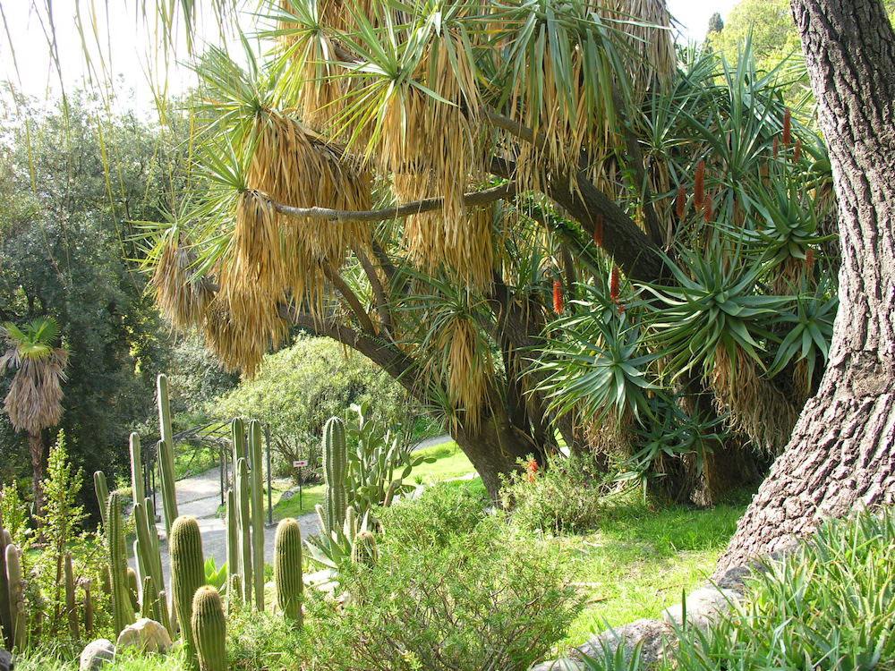 GBH - Piante succulenti