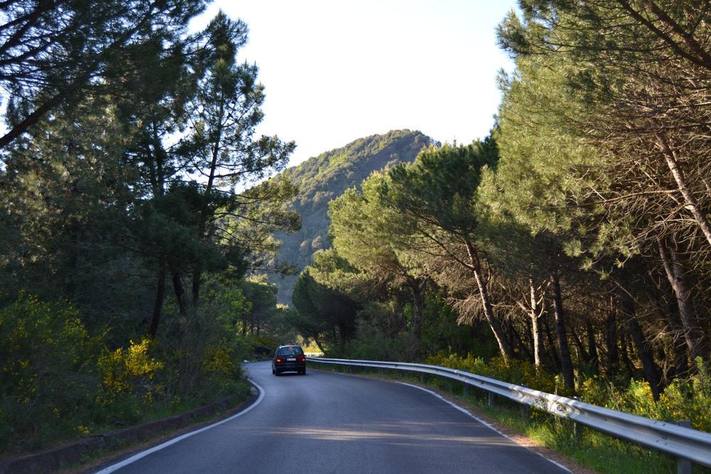 Parco Nazionale del Vesuvio - Natura