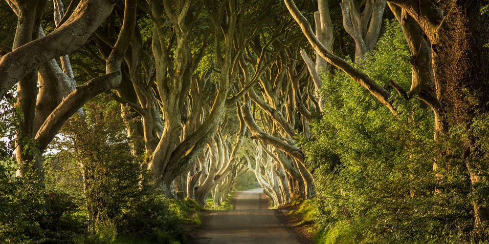 Dark Hedges, Irlanda