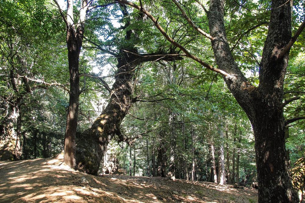 Monte Curcio, boschi