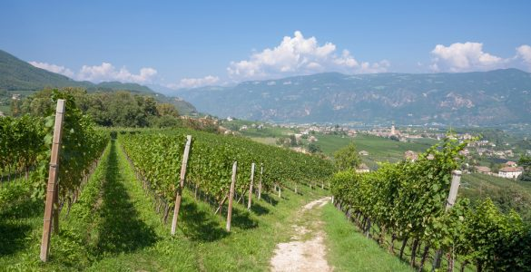 Strada del Vino Alto Adige