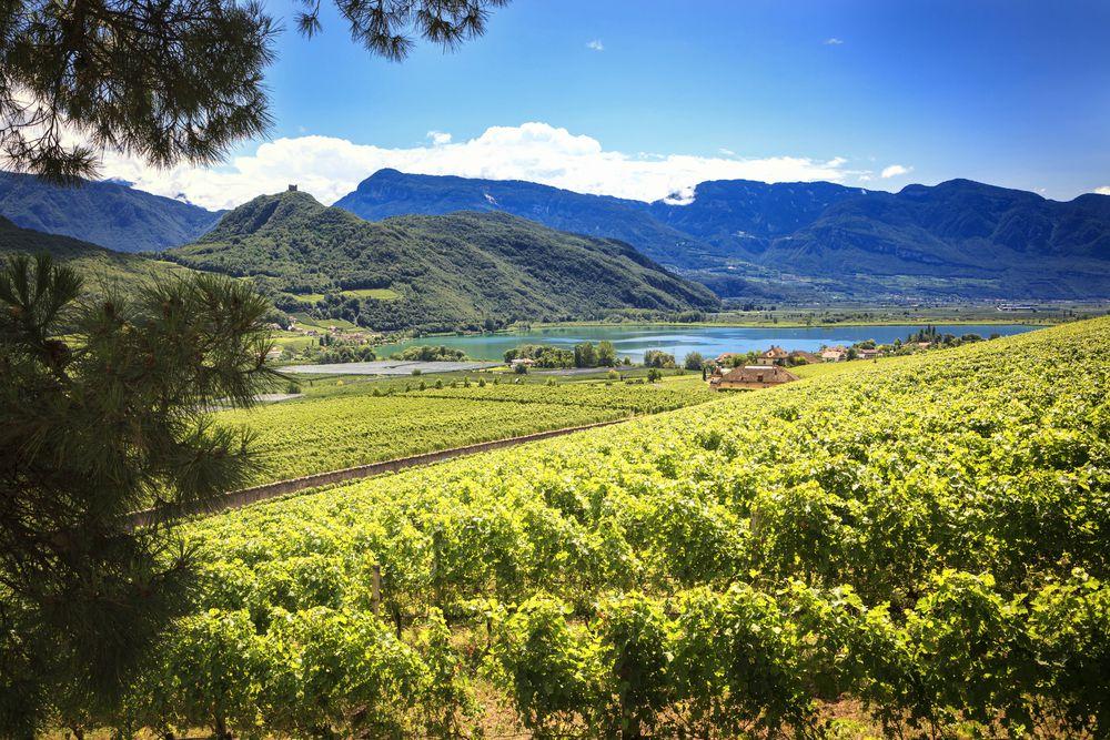 Strada del Vino Alto Adige - Caldaro