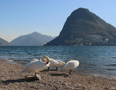Lugano - Cassarate