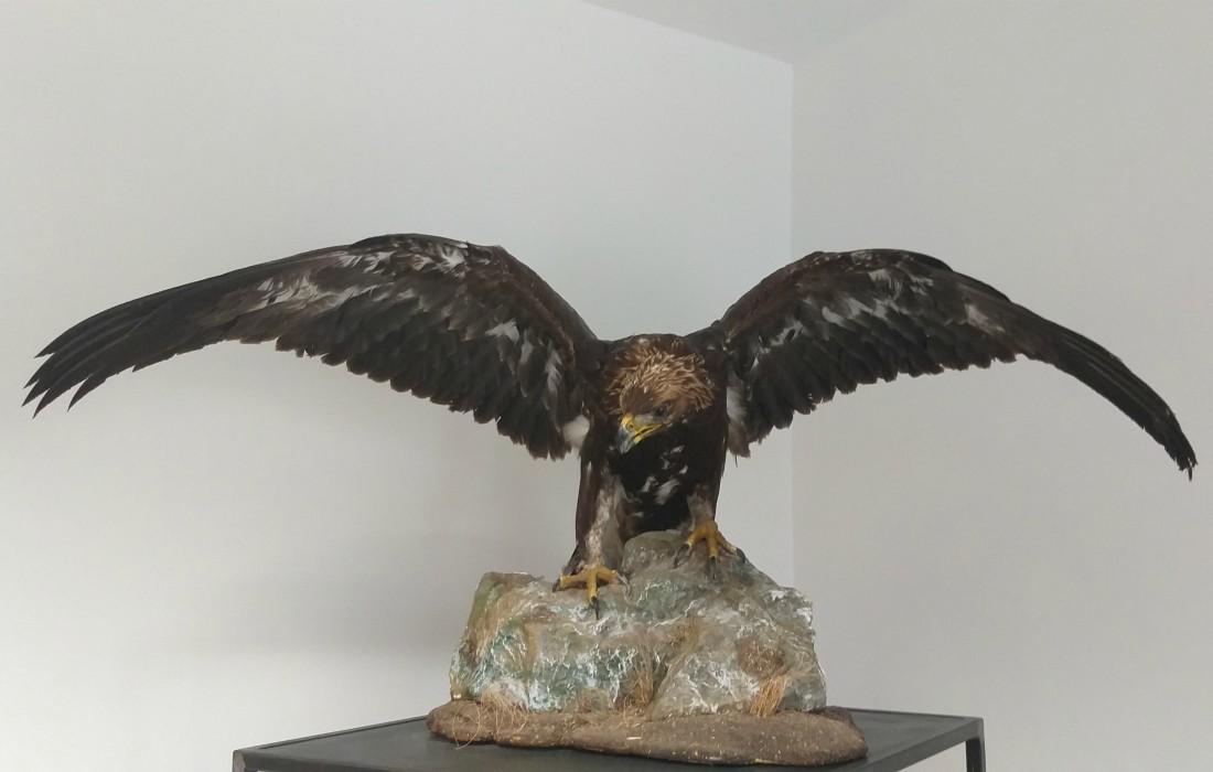 Museo del Furlo