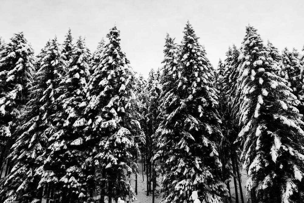 ciaspolate in inverno, paneveggio