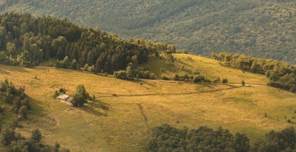 Forest bathing Piemonte
